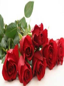 rose-fragrance-masterbatch
